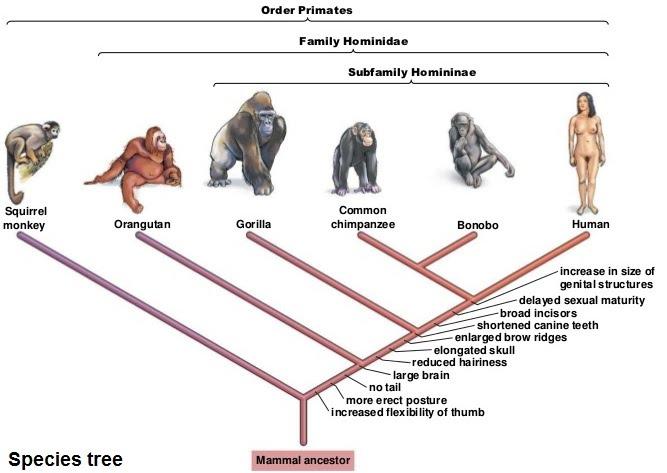 Population genetics and epigenetics   The A Level ...